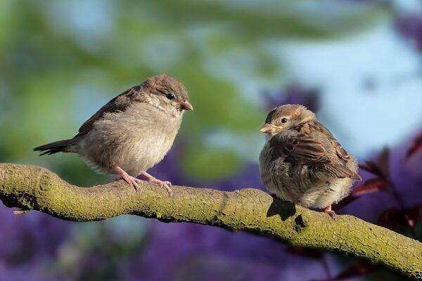 Spektiv zur Vogelbeobachtung