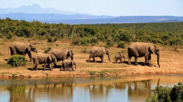 Elefanten beobachten durch ein Fernglas für eine Safari